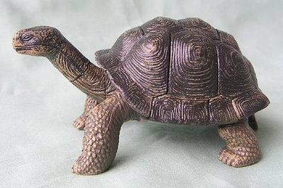 Galapagos-tortoise-plastic-puzzle-f404