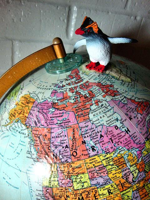 Penguin world color