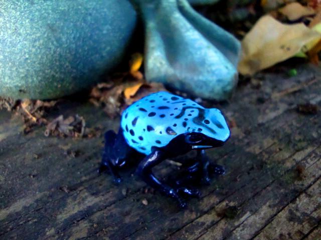 Bluefrog3